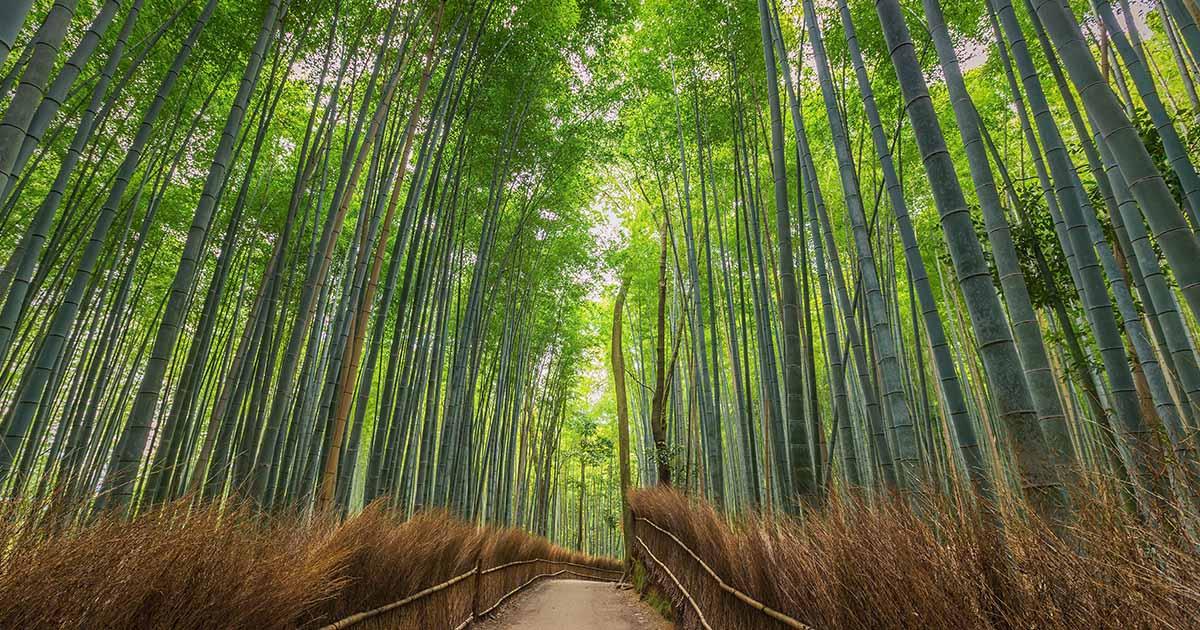 เที่ยวเกียวโต แบบร้างนักท่องเที่ยวกับ Empty Tourism แคมเปญกระตุ้นเศรษฐกิจจากโควิด-19