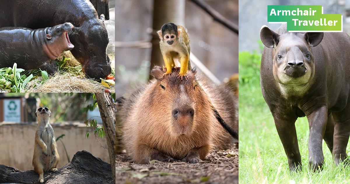 Zoo to you สวนสัตว์ออนไลน์ ส่งตรงความน่ารักของสรรพสัตว์ให้ชมถึงบ้าน