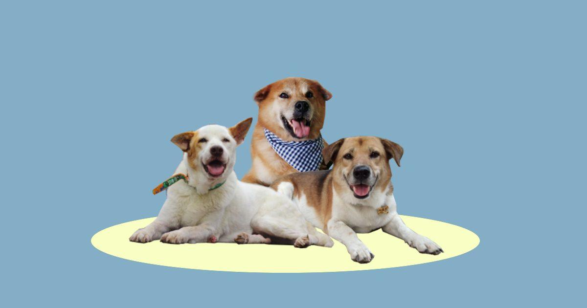 (ห)มา ซีเอ็มยู เปลี่ยนสุนัขจรเป็น สุนัขชุมชน อยู่ร่วมกับคนอย่างยั่งยืน