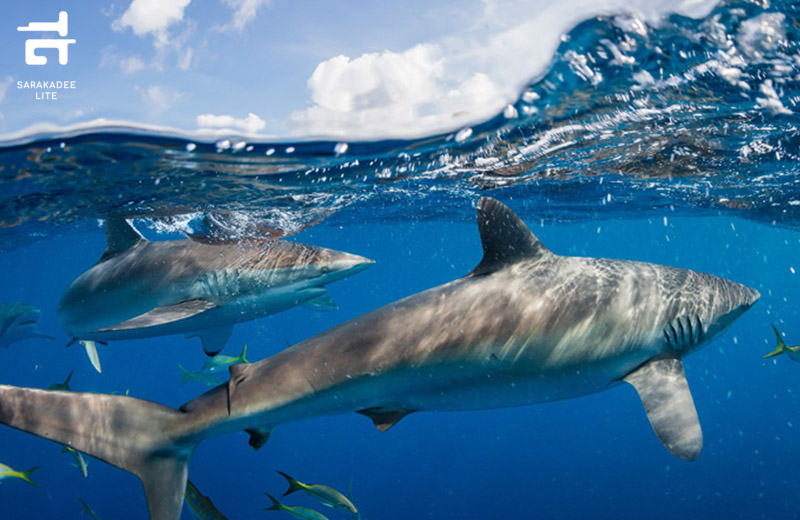 Virtual Ocean Adventures