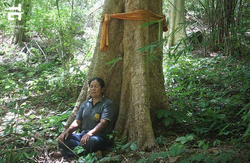 อาบป่า