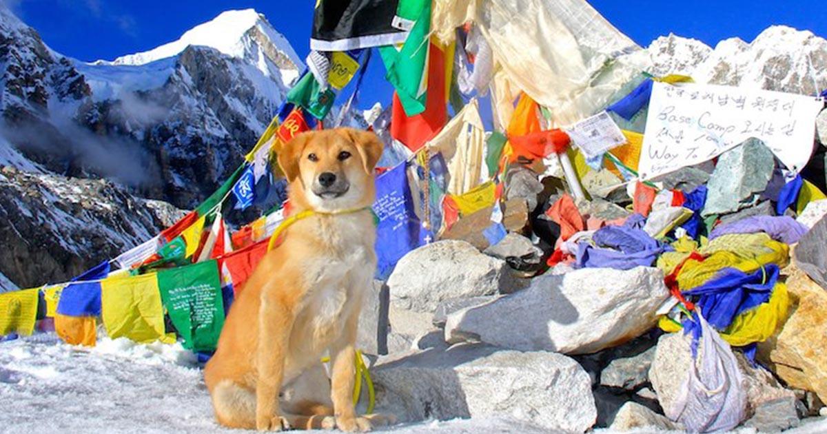 Meet Rupee สุนัขจรจัด ผู้พิชิตยอดเขาเอเวอเรสต์