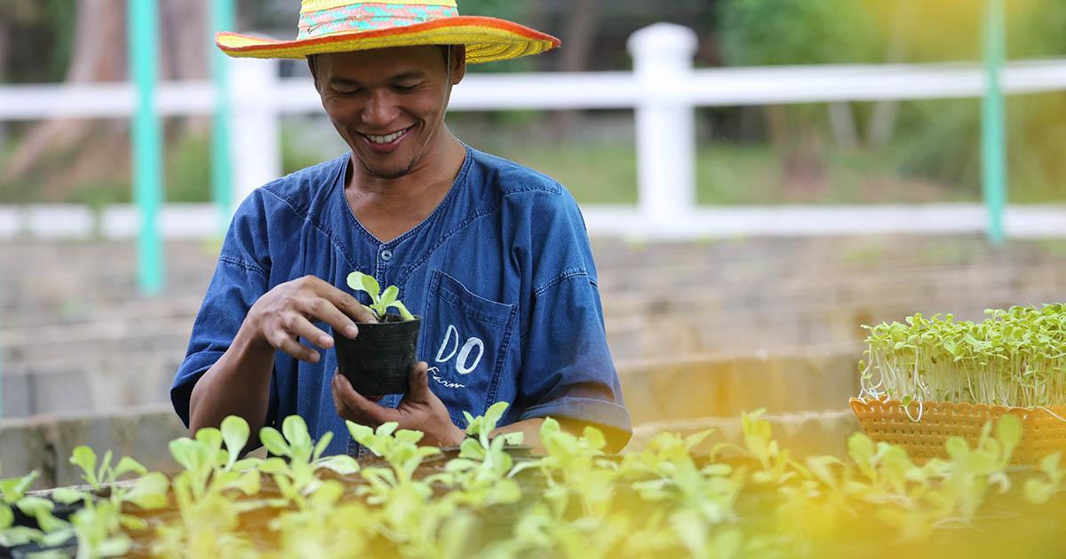 จากสนามโปโลสู่ DO Farm แปลงผัก นาข้าวบนผืนทราย ของ ดุสิตธานี หัวหิน