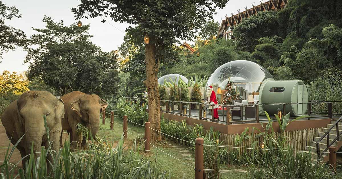 ส่งใจให้ช้างและควาญผ่าน เที่ยวแคมป์ช้างออนไลน์ กลางผืนป่าสามเหลี่ยมทองคำ