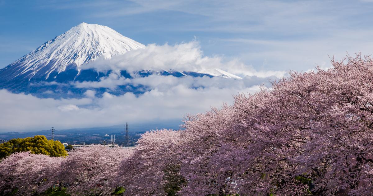 เที่ยวญี่ปุ่นผ่านวัตถุดิบแห่งฤดูใบไม้ผลิ และอาหารไคเซกิที่ KINU BY TAKAGI