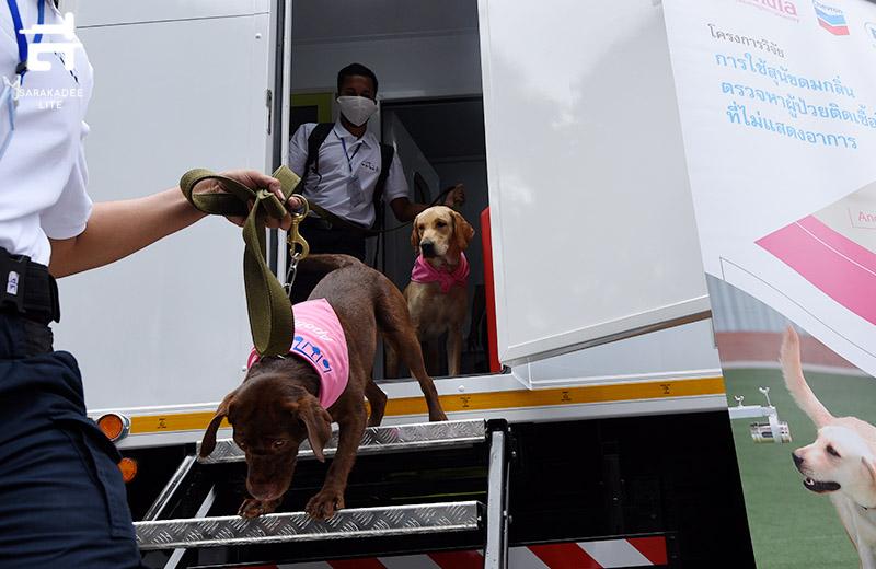 สุนัขดมกลิ่นคัดกรองผู้ติดเชื้อโควิด-19