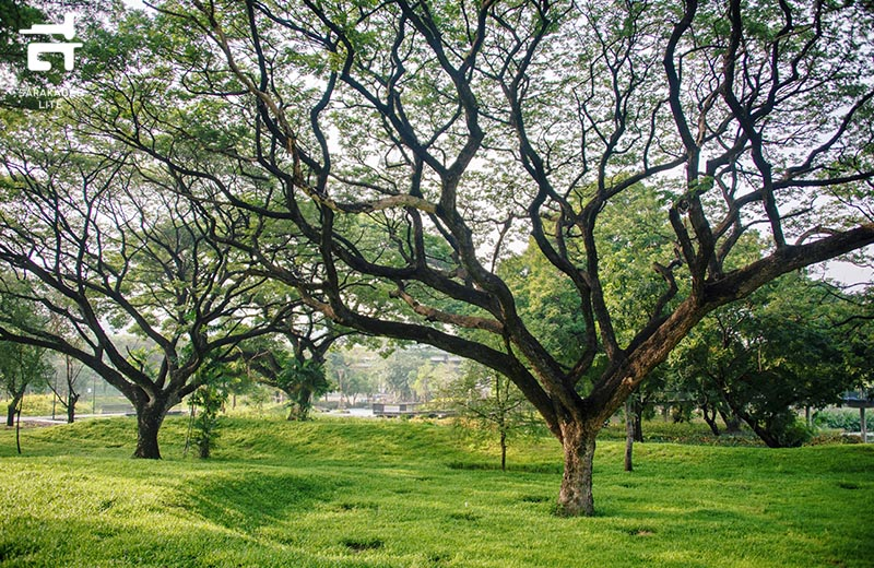 สวนป่าเบญจกิติ